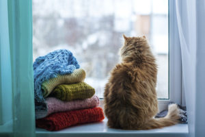 Pet Safety: Toxic Plants to Avoid Leaving in Your Apartment