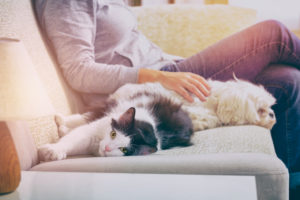 5 Things to Ask Yourself When Searching for A Pet-Friendly Apartment